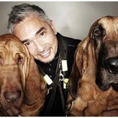 Köpeklerin Ayrılık Endişesine Cesar Milan'dan Tavsiyeler