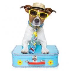 Evcil Hayvanların Yurt Dışı Yolculukları