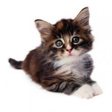 kedi-almadan-once-01