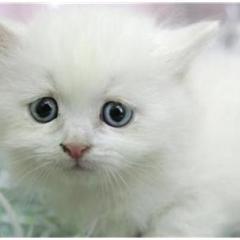 Kedi Almadan Önce…