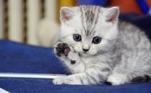 kedi-tirmalamasi