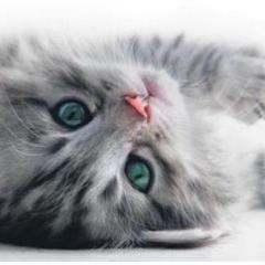 Kedilerde Akne ve Akne Bakımı