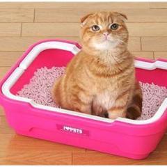 Kedilerde Sistit Hastalığına Dikkat!