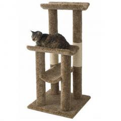 Kediler ve Tırmalama