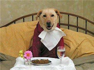 Yetişkin Köpeklerin Beslenmesi