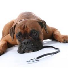 Köpeklerde İlk Yardım Uygulaması