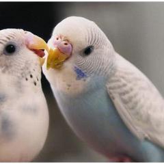 Evde Kuş Bakımı