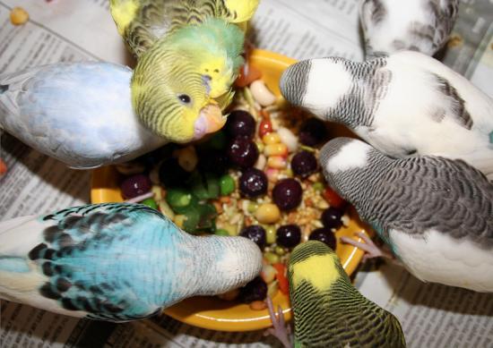 kuslarda-beslenme-01