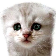Kedilerde Göz Problemleri