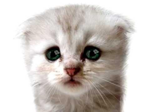 minik-kedi