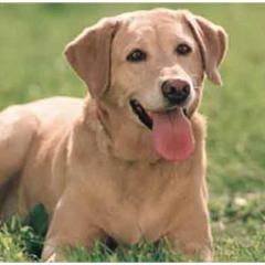 Cesar Millan'dan Köpeğinizi Sakinleştirmek İçin Öneriler!