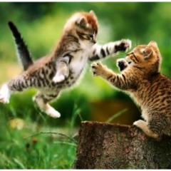 Kedilerde Saldırganlık Problemi