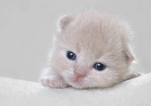 yavru-kediler