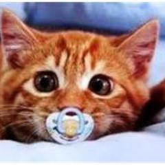 Yavru Kedilerin Vücut Dili
