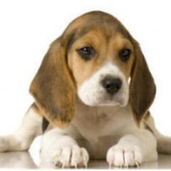 Yavru Köpeğinizin Öncelikli İhtiyaçları
