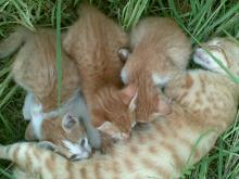 yavrularini-emziren-kedi