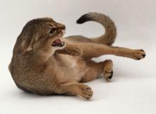 agresif-kedi-03