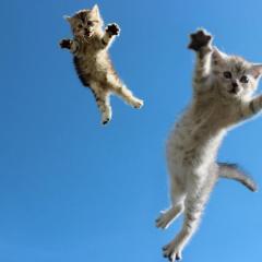 Uçacağına İnanan Kedi