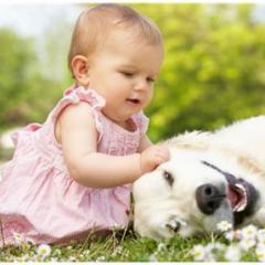 Bebekle Köpeğin Müthiş Düeti