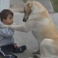 Down Sendromlu Çocuğa Köpek Şevkati