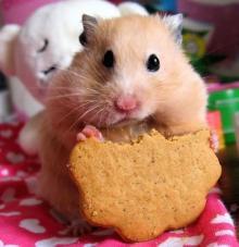 hamster-05
