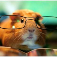 Hamsterlar Hakkında Pratik Bilgiler