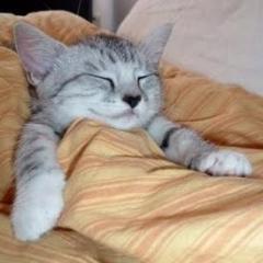 Hastalık Anında Kediniz için Neler Yapabilirsiniz?