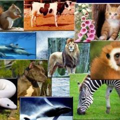 Hayvanlar Hakkında Bilinmeyenler!