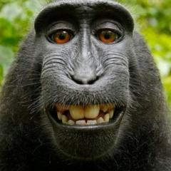 Hayvanların Komik Halleri