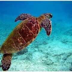 Kaplumbağalar Hakkında