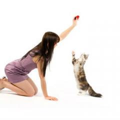 Kediler Eğitilebilir mi?