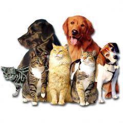 Kedi ve Köpeklerde Yanıklar