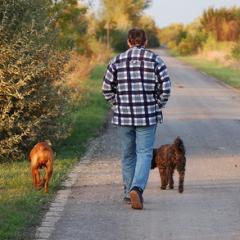 Köpeğinizi Gezdirirken Bunları Unutmayın!