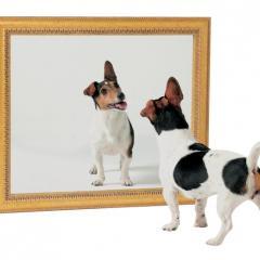 Yavru Kedi ve Köpekler Aynalara Karşı