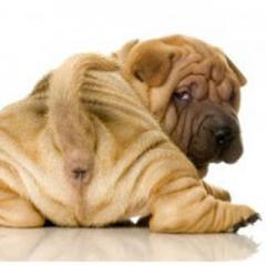 Köpeklerde Dışkı Yeme Sorunu