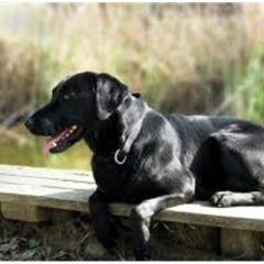 Merdivenden Kayarak İnen Köpek