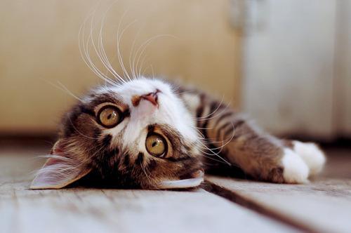 olu-taklidi-yapan-kedi-01