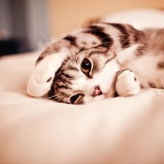 Kedilerin Kendini Sevdirme Çabaları