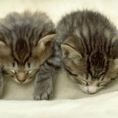 Uyuyan Komik Kedi ve Onun Kibar Kardeşi