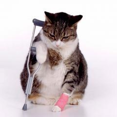 Trafik Kazalarında Yaralanma
