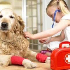 Yaralı Kedi ve Köpek Nasıl Taşınır?