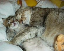 yavru-kedi-ve-annesi