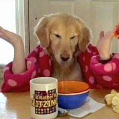 Ginger'ın Sabah Kahvaltısı