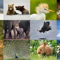Hayvanlar Alemi'nin En'leri