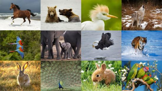 hayvanlar-01