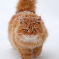 Karda Atlamaya Çalışan Kedi
