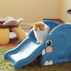 Kaydırakla Oynayan Sevimli Kediler