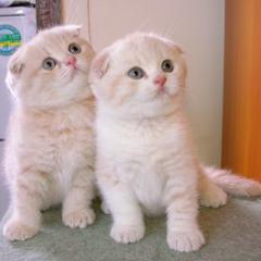 Kedi Eğitiminde Püf Noktalar