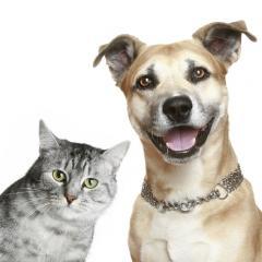 Kedi ve Köpeklerde Mantar