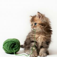 Kedi Oyunları